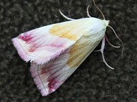 Moth News Early Autumn Review