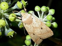 Moth News Late Autumn Review