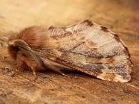 Moth News Last night of the Proms