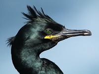 Research Endoscopy helps study seabird parasite burden