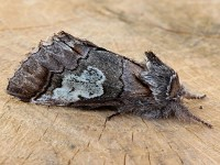 Moth News Early Winter Review