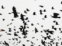 Research How birds of different feathers flock together