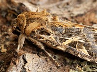 Moth News Late Winter Review