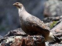 Birding abroad Birding the high country