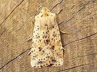 Moth News Early Spring 2013