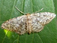 Moth News Early summer review