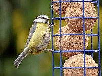 BTO Changing fortunes for our winter birds