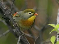 Birding abroad Hubei Province, China