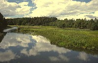 Birding abroad Estonia: a paradise found