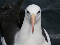 Research Personality differences may influence albatross behaviour