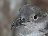 Seawatch SW Project Shearwater, 2014 update