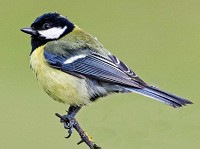 Research Divorce in birds is affected by their social group