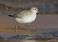 Research Wader 'shrinks' due to climate change