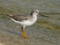 Research World's oldest Terek Sandpiper found in Belarus