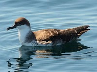 Articles Falmouth pelagics scheduled for summer 2016