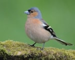 Research Airport noise impacts birdsong