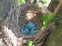 Research Can bird feeders do more harm than good?
