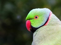 Research Mapping movements of alien bird species