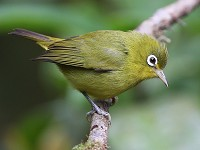 Research Two undescribed bird species discovered in South Kalimantan