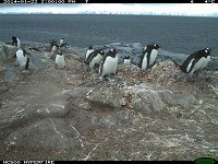 Research Time-lapse cameras provide insight into penguin winter behaviour