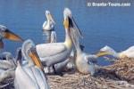 Birding abroad Srebarna Biosphere reserve, Bulgaria