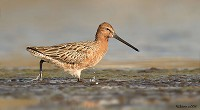 Focus On Eastern waderfest