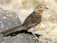 Birding abroad Birding Daocheng