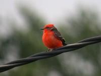 Birding abroad Gosney's in Texas