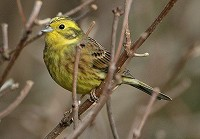 Research Crumbs of Comfort for Farmland Birds