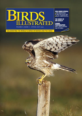 Birds Illustrated cover