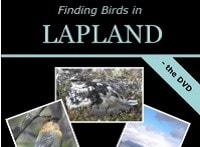 Finding Birds in Lapland - the book and the DVD by Dave Gosney