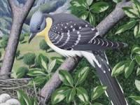 Cuckoos of the World by Johannes Erritzøe et al.