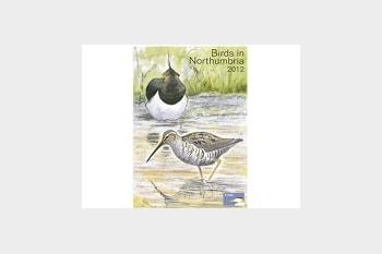 Birds in Northumbria 2012