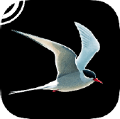 Collins Bird Guide app