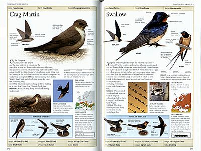 handbook of british birds