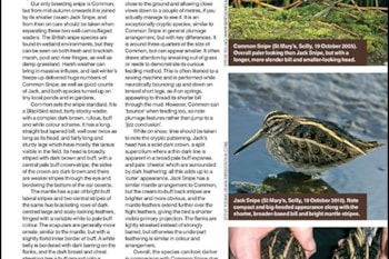 Autumn snipe ID tips