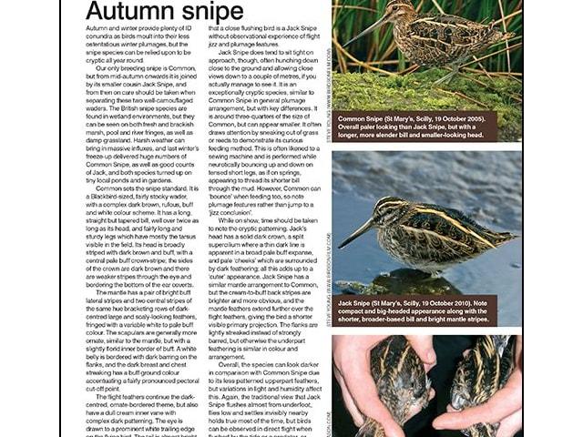Autumn snipe ID tips