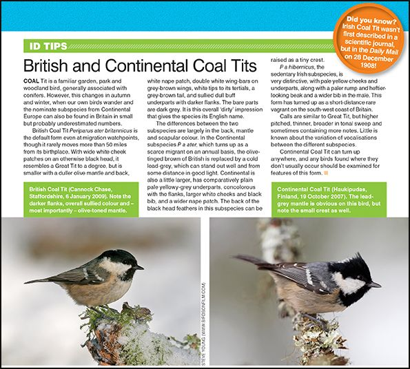ID tips: British and Continental Coal Tits