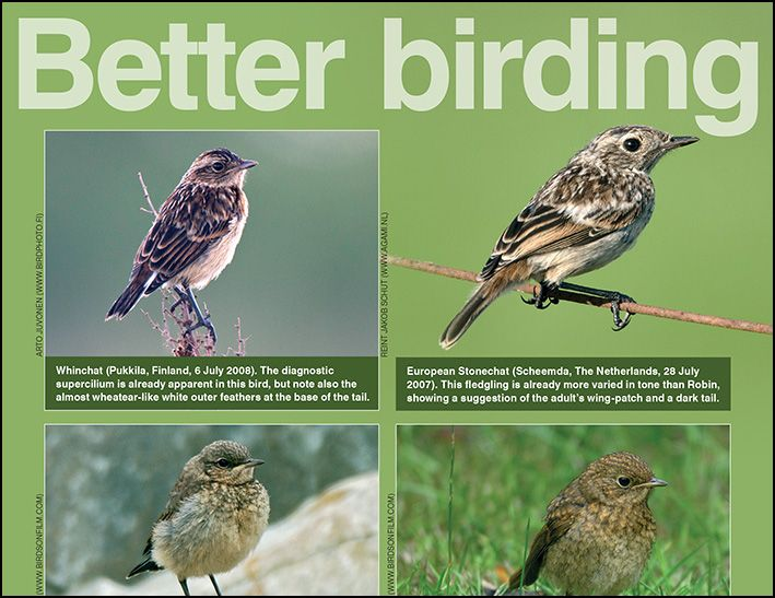 July ID tips: juvenile chats