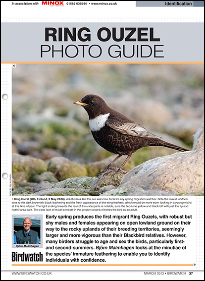 Ring Ouzel photo ID guide