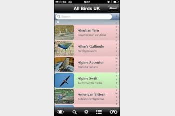 All Birds UK app.