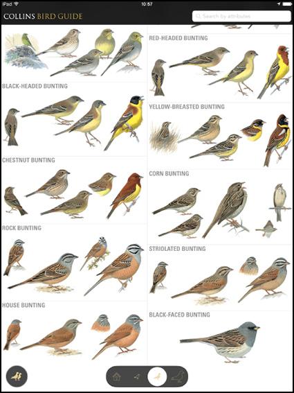Garden Birds Uk Identification Garden Ftempo