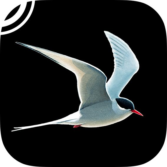 Collins Bird Guide app.