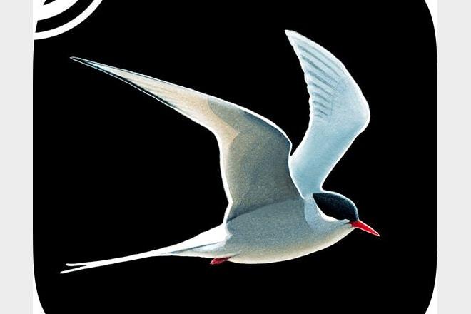 Collins Bird Guide app.