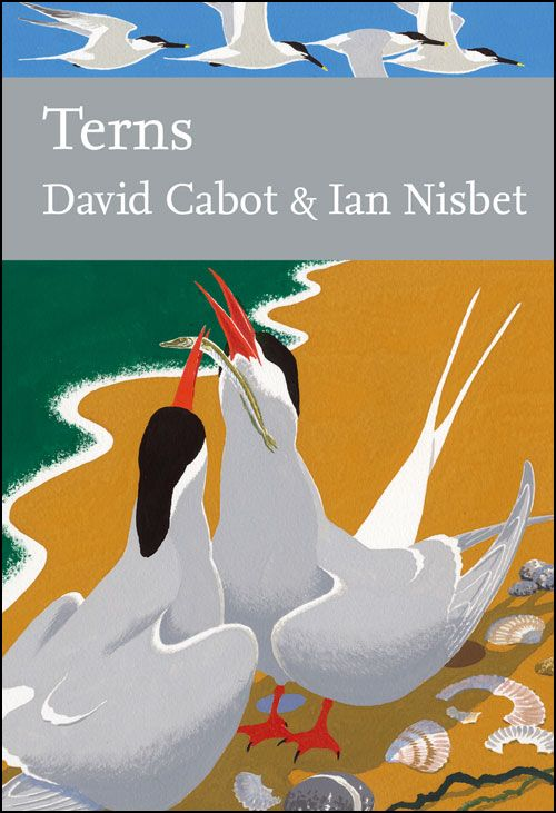 Terns by David Cabot and Ian Nisbet.