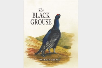 The Black Grouse by Patrick Laurie.