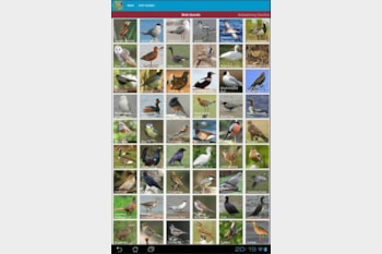UK Bird Sounds by Luminous Apps features clear recordings of 258 British birds.