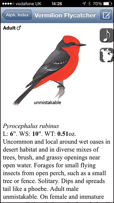 Vermillion Flycatcher on the Sibley app