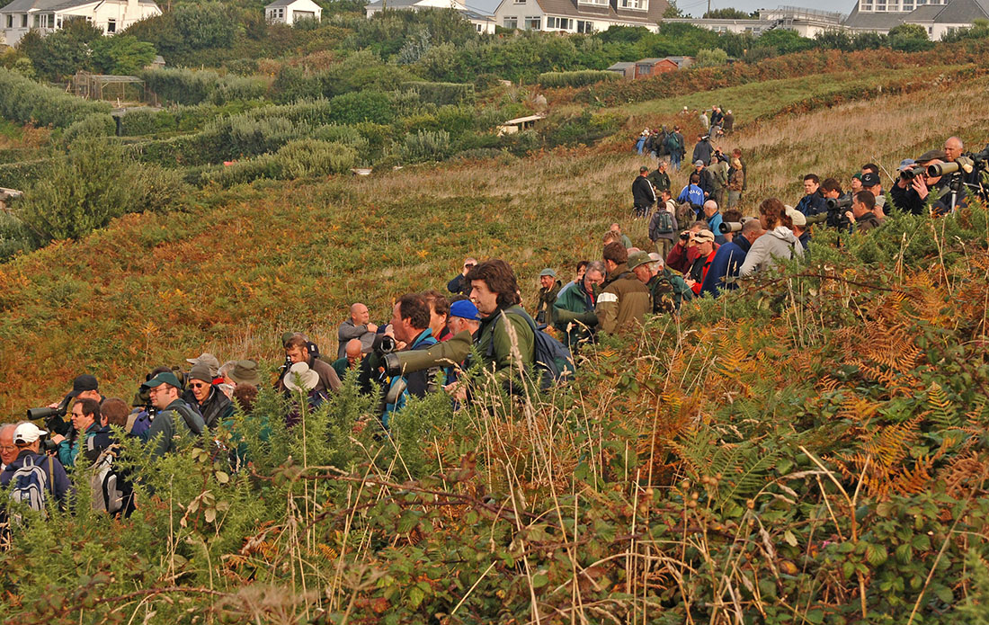 Birders waiting for Paddyfield Warbler, Scilly, October 2005, Steve Young