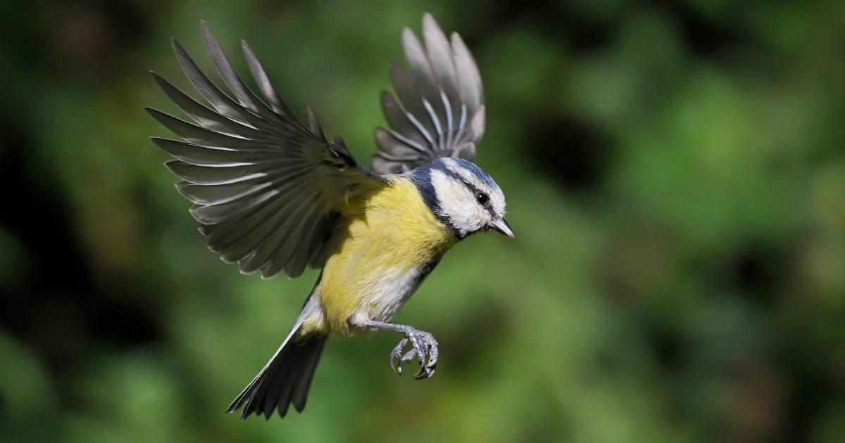 Fresh concern for Scotland's woodland birds